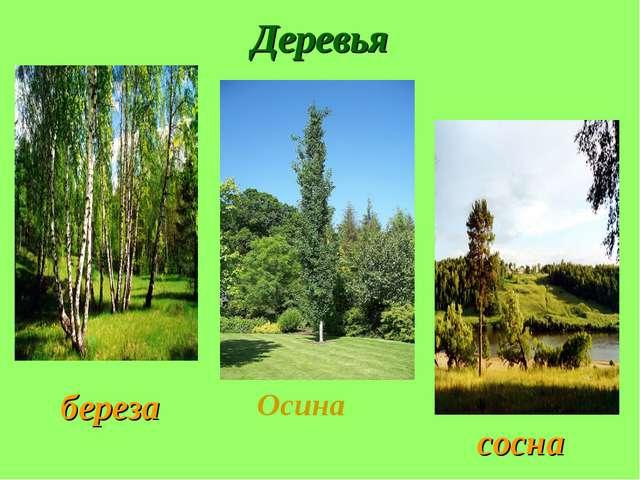 Деревья Осина береза сосна
