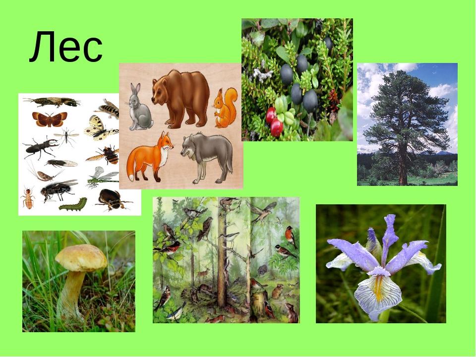 яркий логотип картинки лесного сообщества делается разным причинам