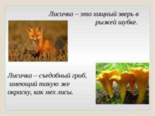 Лисичка – это хищный зверь в рыжей шубке. Лисичка – съедобный гриб, имеющий т