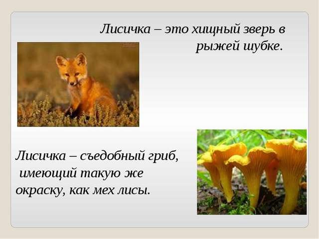 Лисичка – это хищный зверь в рыжей шубке. Лисичка – съедобный гриб, имеющий т...