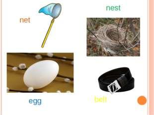 net nest egg belt
