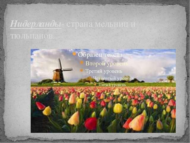 Нидерланды- страна мельниц и тюльпанов.