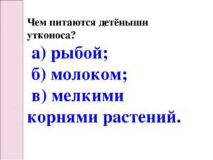 Чем питаются детёныши утконоса? а) рыбой; б) молоком; в) мелкими корнями раст
