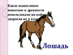 Какое выносливое животное в древности использовали на войне, запрягая их в ко
