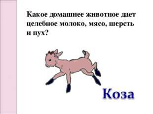 Какое домашнее животное дает целебное молоко, мясо, шерсть и пух?