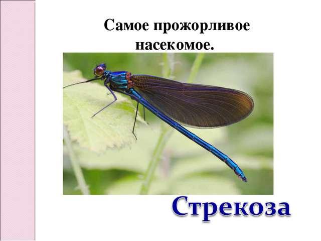 Самое прожорливое насекомое.