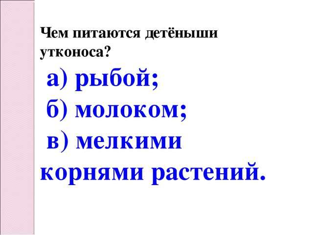 Чем питаются детёныши утконоса? а) рыбой; б) молоком; в) мелкими корнями раст...