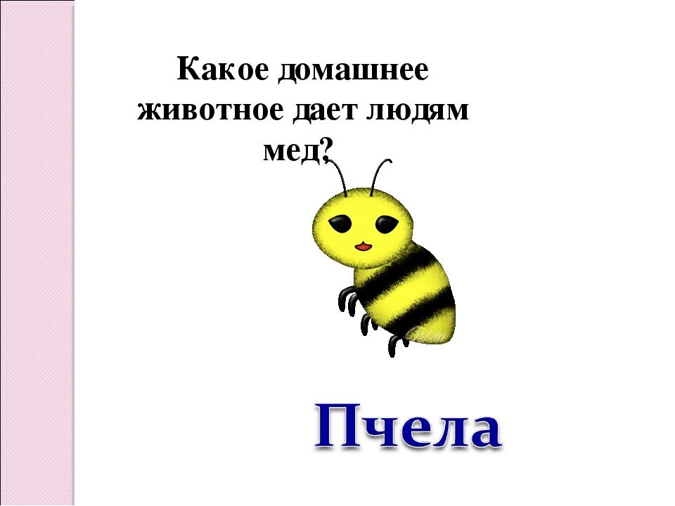 Какое домашнее животное дает людям мед?