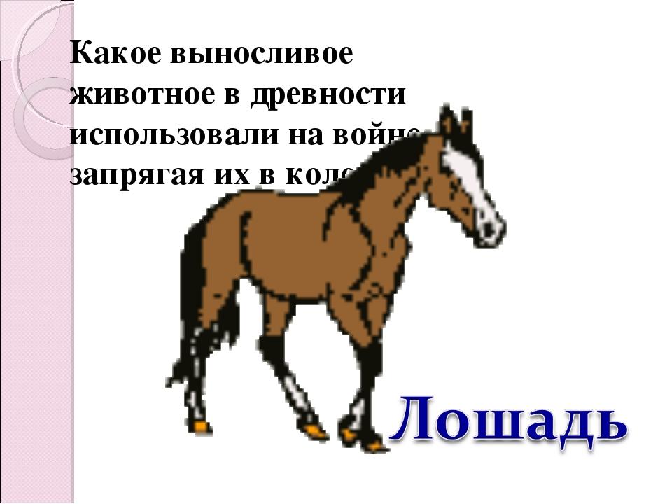 Какое выносливое животное в древности использовали на войне, запрягая их в ко...
