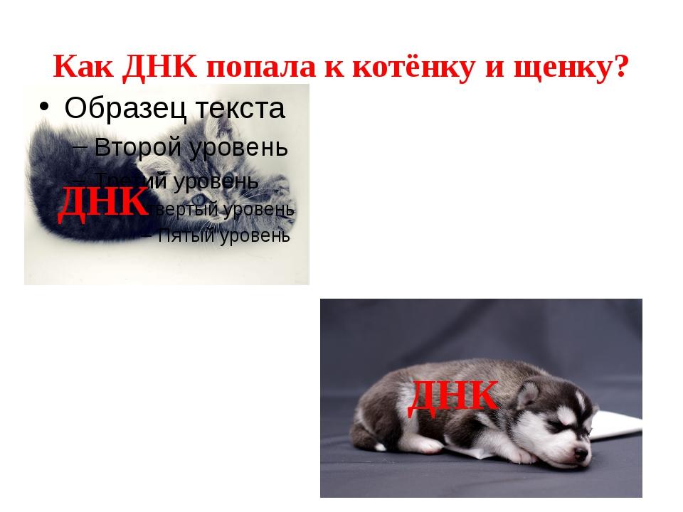 Как ДНК попала к котёнку и щенку? ДНК ДНК