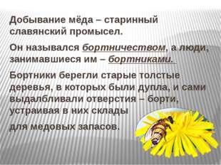 Добывание мёда – старинный славянский промысел. Он назывался бортничеством,