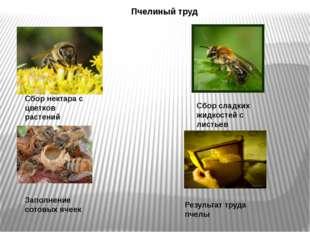 Сбор нектара с цветков растений Сбор сладких жидкостей с листьев Пчелиный тру