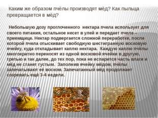 Каким же образом пчёлы производят мёд? Как пыльца превращается в мёд? Неболь