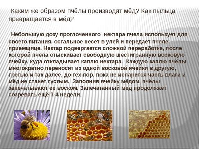 Каким же образом пчёлы производят мёд? Как пыльца превращается в мёд? Неболь...