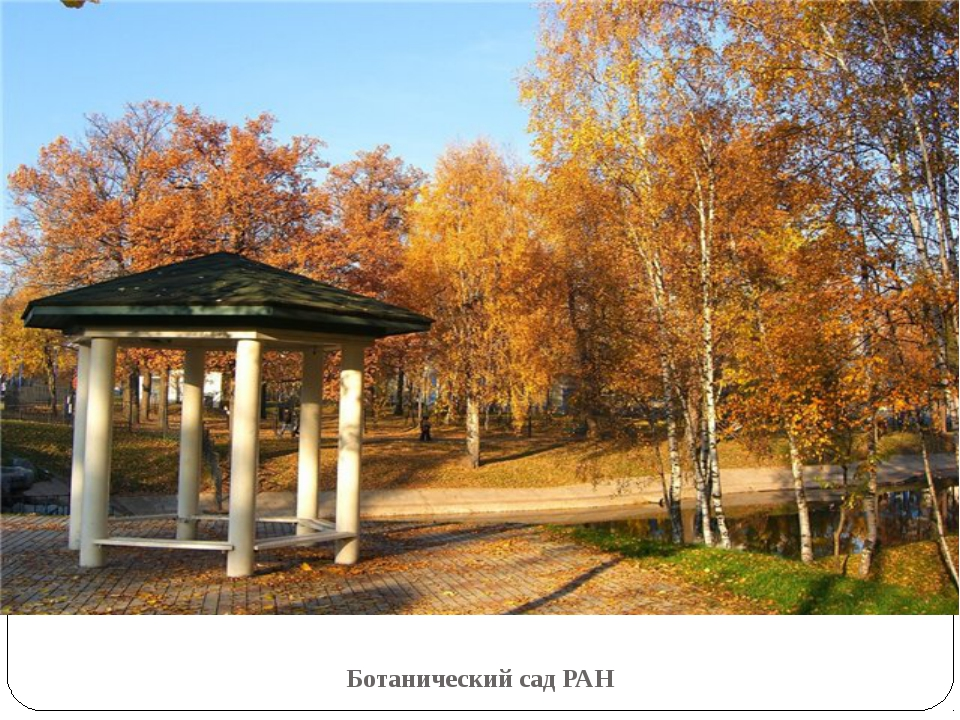 Ботанический сад РАН