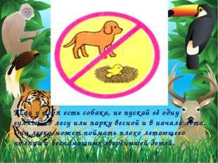 Если у тебя есть собака, не пускай её одну гулять по лесу или парку весной и
