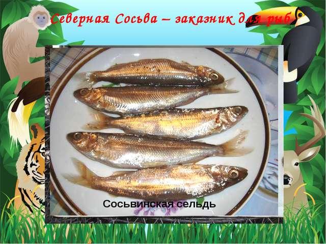 Северная Сосьва – заказник для рыб Пелядь Сиг Сосьвинская сельдь