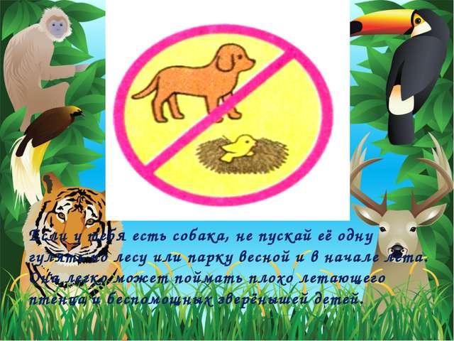 Если у тебя есть собака, не пускай её одну гулять по лесу или парку весной и...