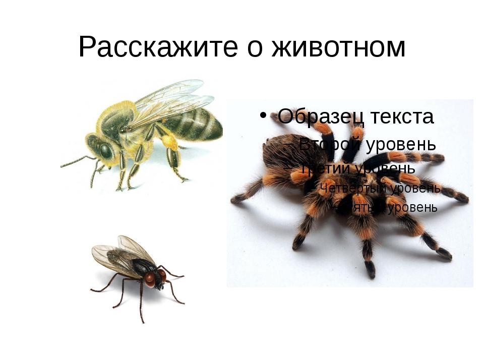 Расскажите о животном