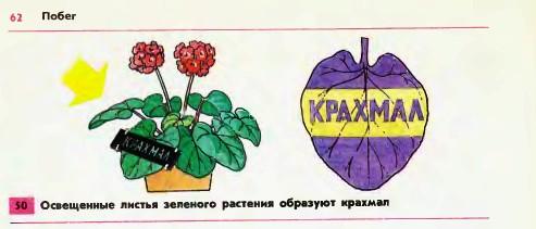 http://school.xvatit.com/images/8/80/31.07-1.jpg