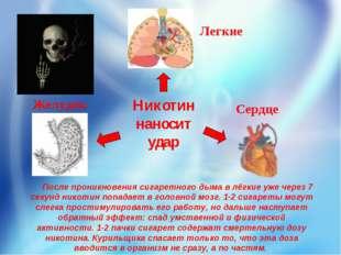 Никотин наносит удар Легкие Желудок Сердце После проникновениясигаретного ды