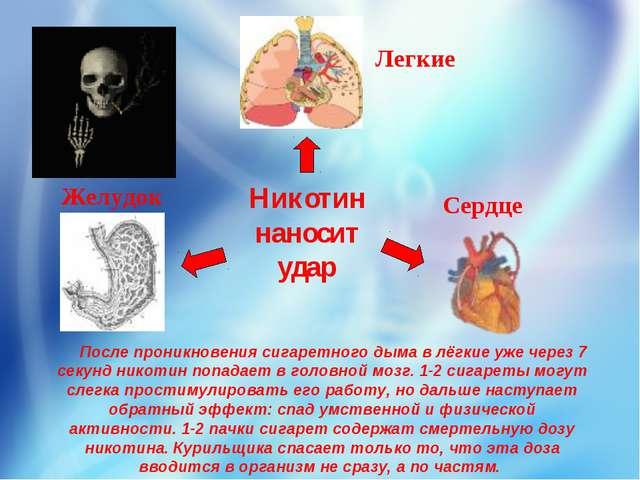 Никотин наносит удар Легкие Желудок Сердце После проникновениясигаретного ды...
