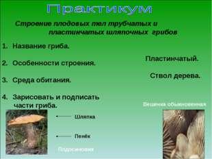 Название гриба. Особенности строения. Среда обитания. Зарисовать и подписать