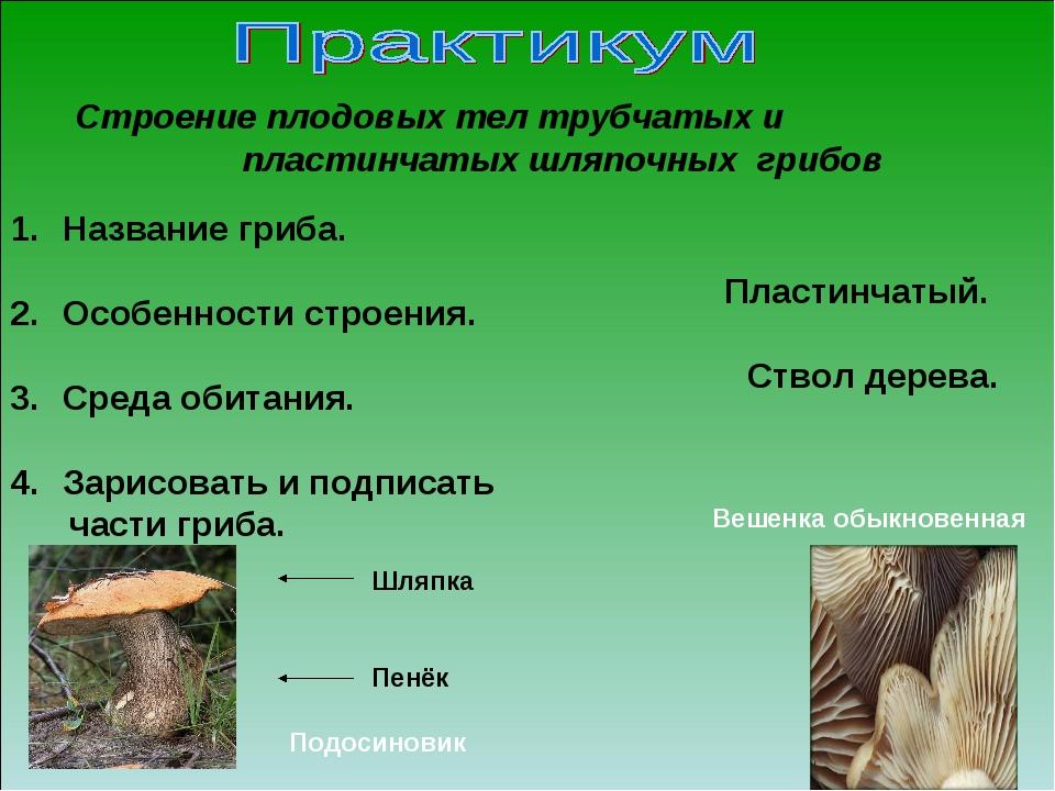 Название гриба. Особенности строения. Среда обитания. Зарисовать и подписать...