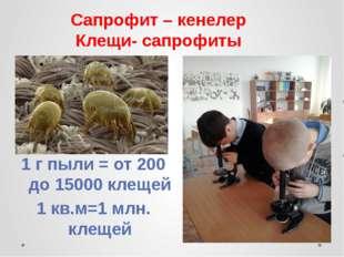 Сапрофит – кенелер Клещи- сапрофиты 1 г пыли = от 200 до 15000 клещей 1 кв.м=