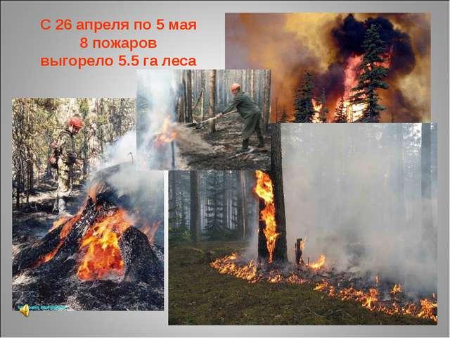 С 26 апреля по 5 мая 8 пожаров выгорело 5.5 га леса
