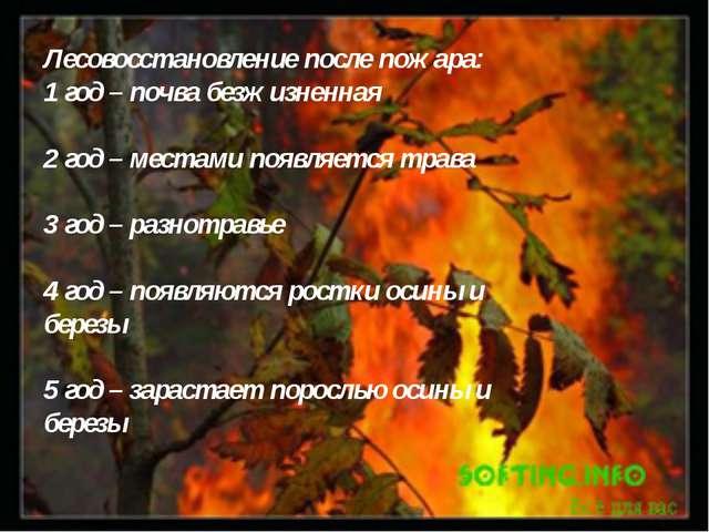 Лесовосстановление после пожара: 1 год – почва безжизненная 2 год – местами п...