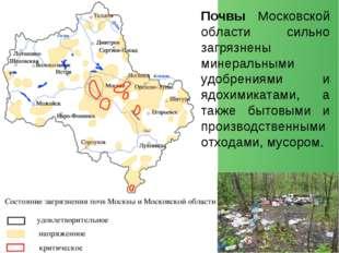 Почвы Московской области сильно загрязнены минеральными удобрениями и ядохими