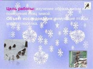 Цель работы: изучение образа жизни и поведения птиц зимой. Объект исследовани