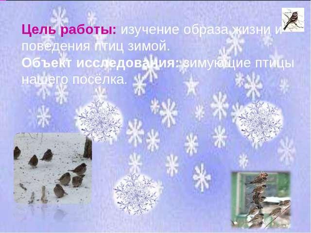 Цель работы: изучение образа жизни и поведения птиц зимой. Объект исследовани...