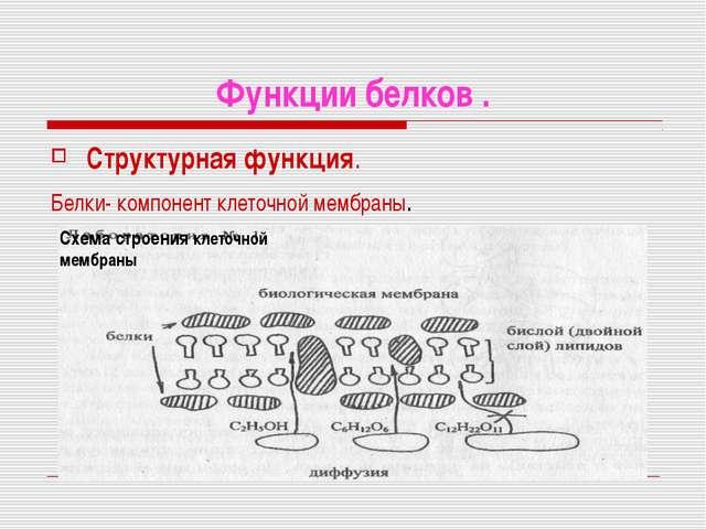 Функции белков . Структурная функция. Белки- компонент клеточной мембраны. Сх...