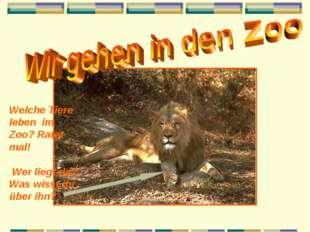 Welche Tiere leben im Zoo? Ratet mal! Wer liegt da? Was wisst ihr über ihn?