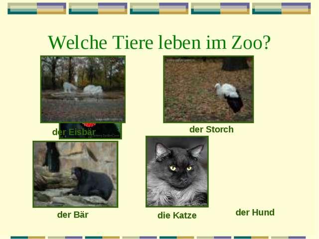 Welche Tiere leben im Zoo? der Eisbär der Storch der Bär die Katze der Hund