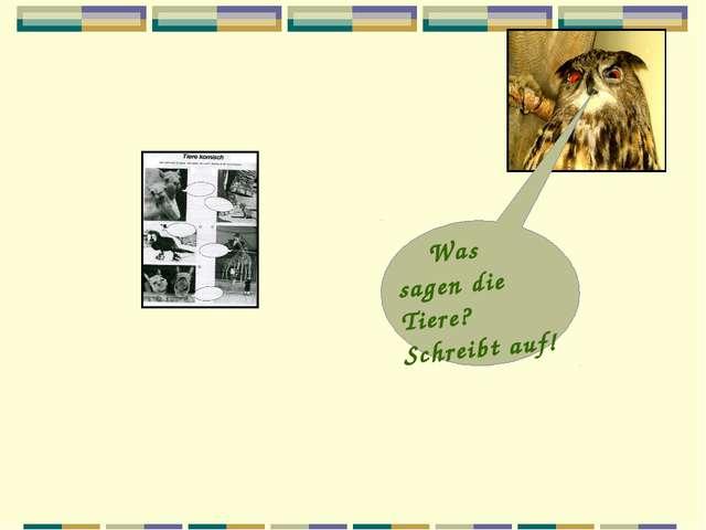 Was sagen die Tiere? Schreibt auf!