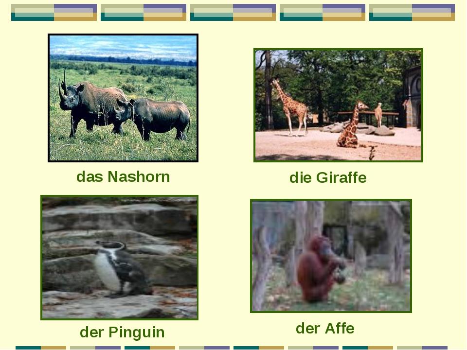 das Nashorn die Giraffe der Pinguin der Affe