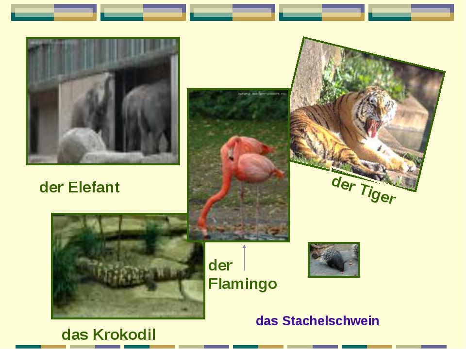 der Elefant das Krokodil der Tiger der Flamingo das Stachelschwein
