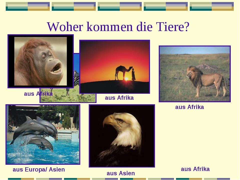 Woher kommen die Tiere? aus Afrika aus Afrika aus Afrika aus Afrika aus Europ...