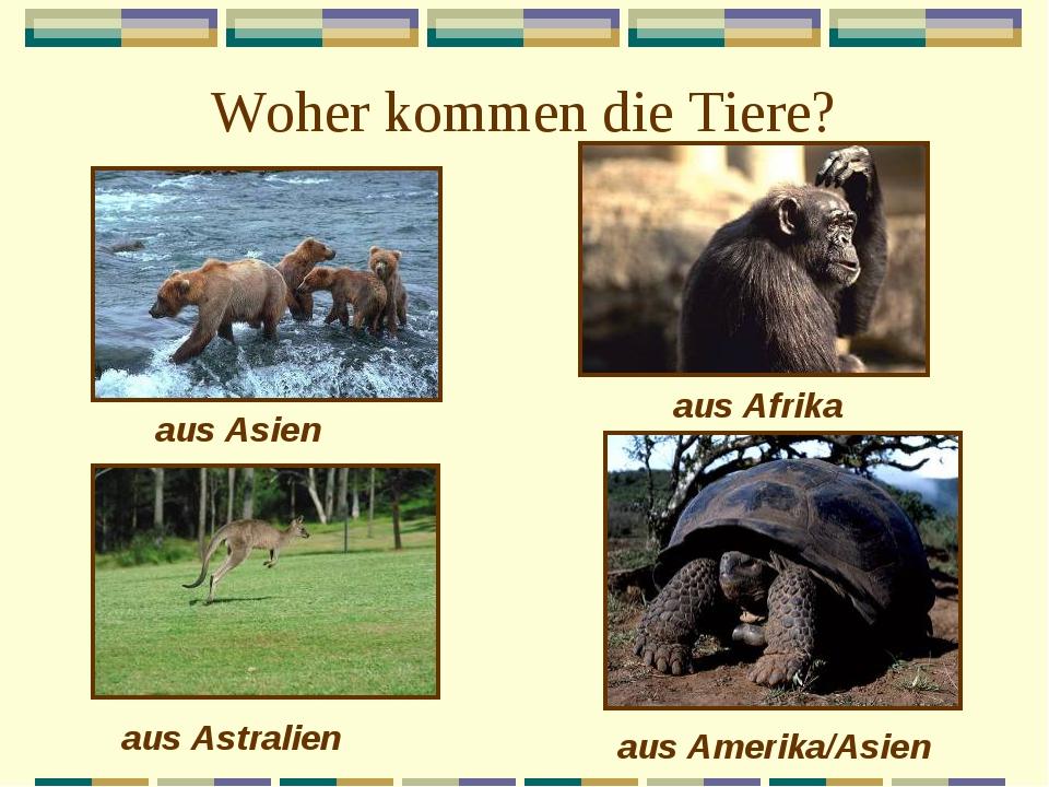 Woher kommen die Tiere? aus Asien aus Afrika aus Astralien aus Amerika/Asien