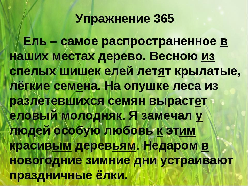 Упражнение 365 Ель – самое распространенное в наших местах дерево. Весною из...