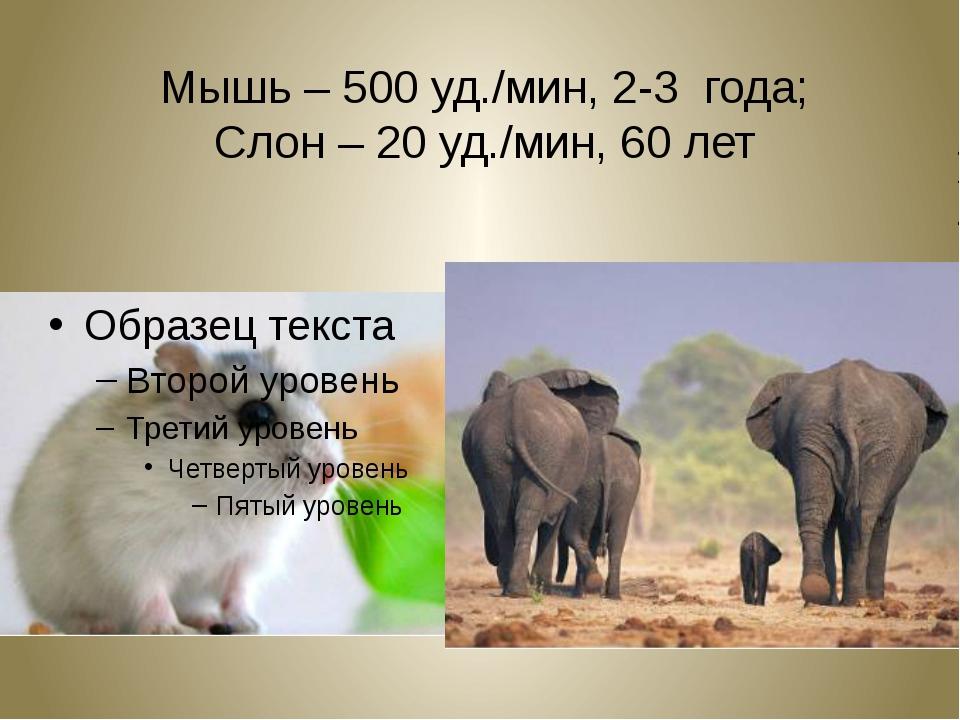 Мышь – 500 уд./мин, 2-3 года; Слон – 20 уд./мин, 60 лет
