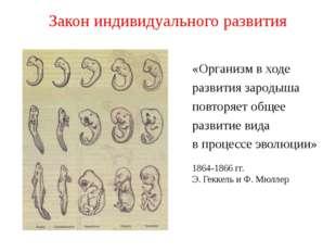 Закон индивидуального развития 1864-1866 гг. Э. Геккель и Ф. Мюллер «Организм