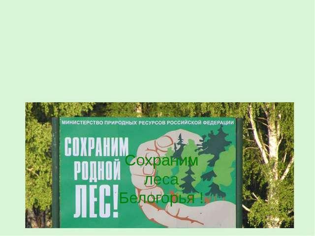 Сохраним леса Белогорья !