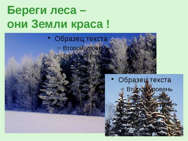 Береги леса – они Земли краса !