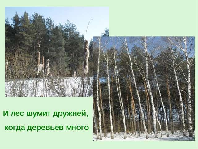 И лес шумит дружней, когда деревьев много