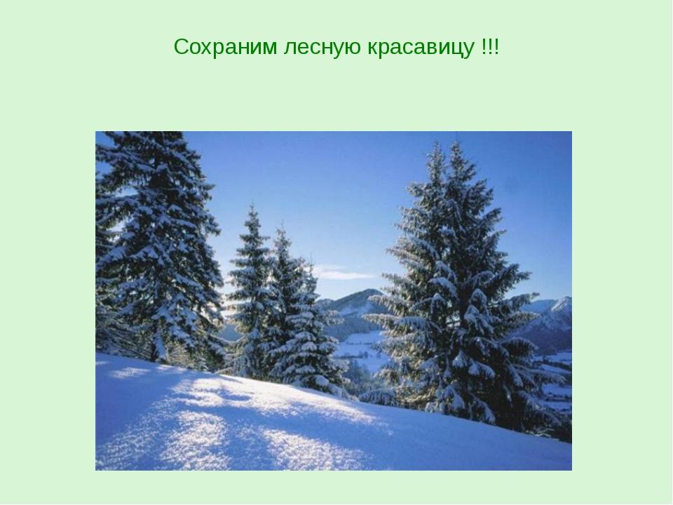 Сохраним лесную красавицу !!!