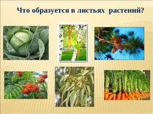 Что образуется в листьях растений?